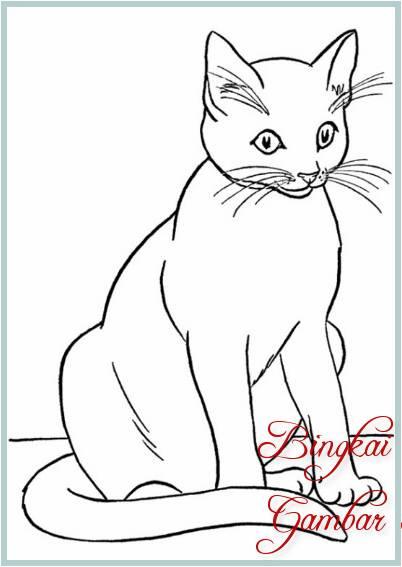 Gambar Sketsa Kucing Sederhana
