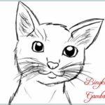 Gambar Sketsa Muka Kucing