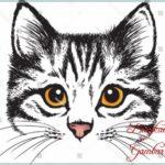Gambar Sketsa Wajah Kucing