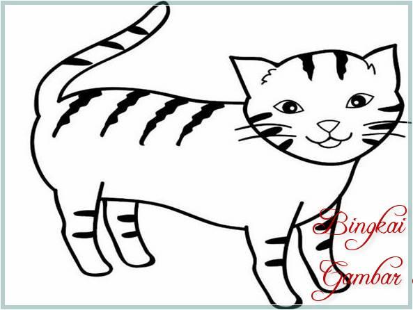 Kumpulan Gambar Sketsa Kucing Bingkaigambarcom