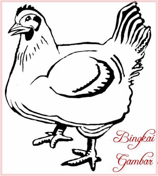 Sketsa Gambar Binatang Ayam