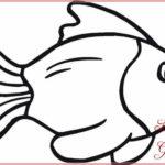 Sketsa Gambar Ikan Sederhana