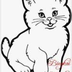Sketsa Gambar Kelinci Dan Kucing