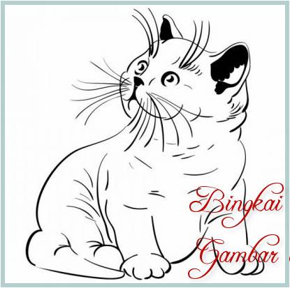 Sketsa Gambar Kucing Anggora