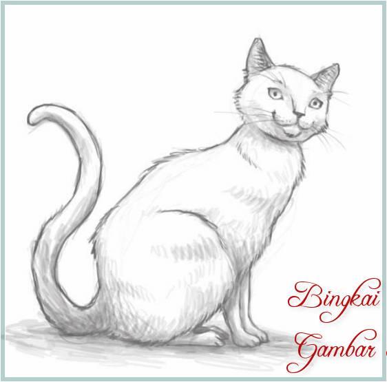 Sketsa Gambar Kucing Mudah