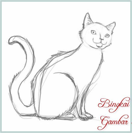 Sketsa Gambar Kucing Sederhana