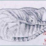 Sketsa Gambar Kucing Tidur