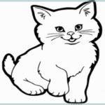 Sketsa Hewan Kucing Anggora