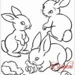 Sketsa Kelinci Makan Rumput