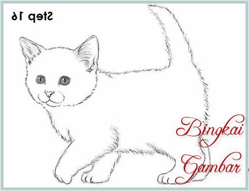 Sketsa Kucing Anggora