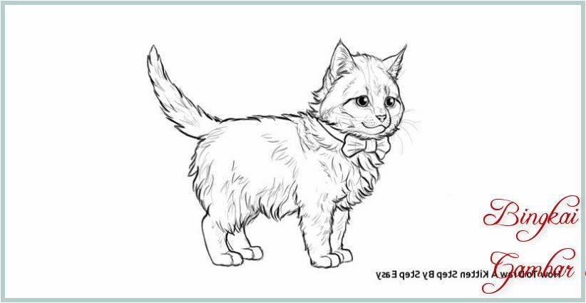 Sketsa Kucing Untuk Diwarnai
