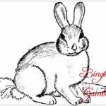 Sketsa Lukisan Hewan Kelinci