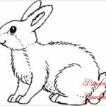 Sketsa Lukisan Kelinci