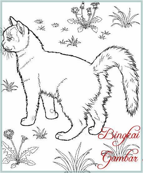 Sketsa Mewarnai Kucing Bingkaigambar Com