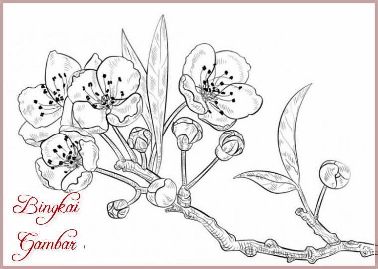 Contoh Gambar Bunga Yang Simple