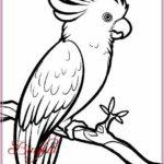 Contoh Gambar Sketsa Burung Terbaru