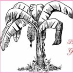 Contoh Gambar Sketsa Pohon Pisang Terbaru