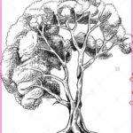 Contoh Gambar Sketsa Pohon Terbaru