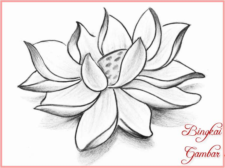 Contoh Sketsa Bunga Teratai Terbaik