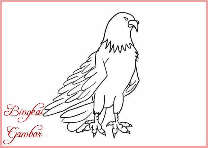 Contoh Sketsa Burung Elang