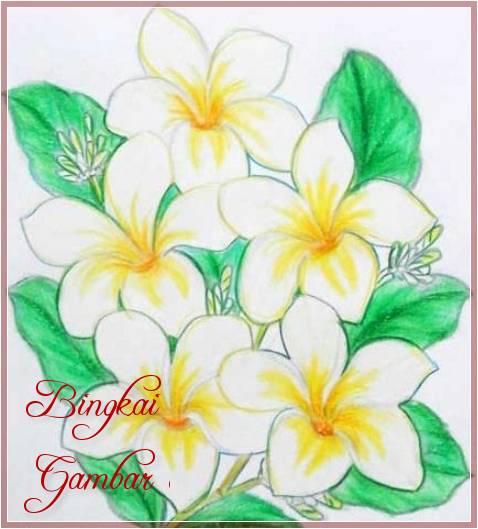 Gambar Bunga Kamboja Sederhana