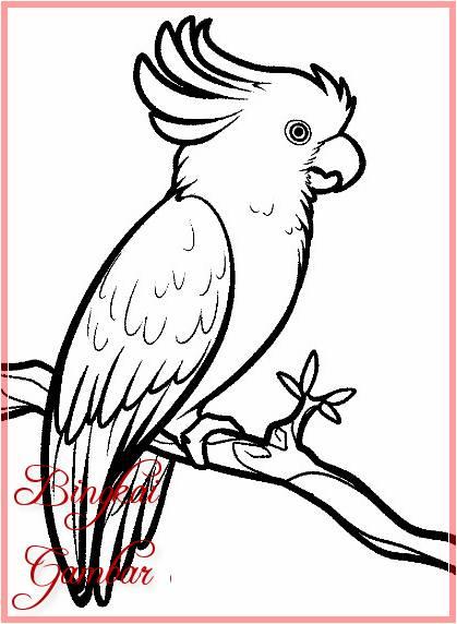 Gambar Kartun Hewan Burung