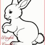 Gambar Kartun Hewan Kelinci