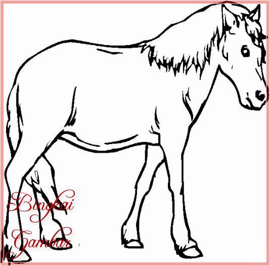 Gambar Kartun Hewan Kuda