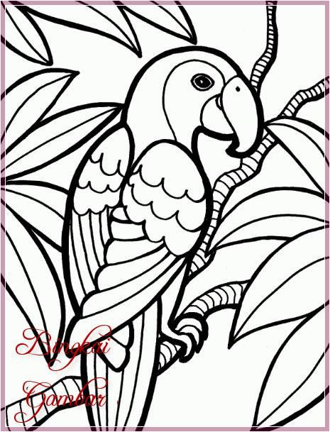 Gambar Sketsa Burung Beo Terbaru