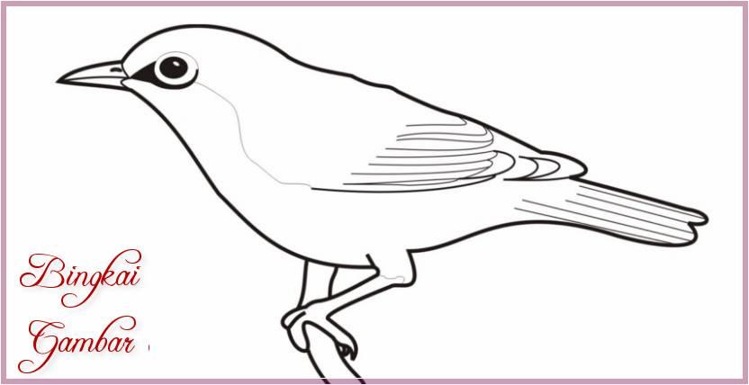 Gambar Sketsa Burung Berwarna Terbaru