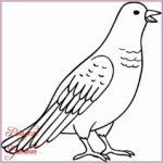 Gambar Sketsa Burung Dara Pos Terbaru
