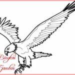 Gambar Sketsa Burung Elang Jawa