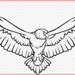 Gambar Sketsa Burung Elang Terbang