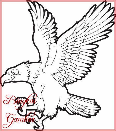 Gambar Sketsa Burung Elang