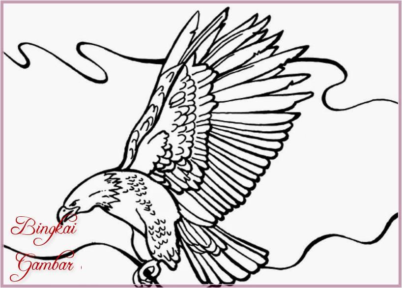 Gambar Sketsa Burung Garuda Terbaru