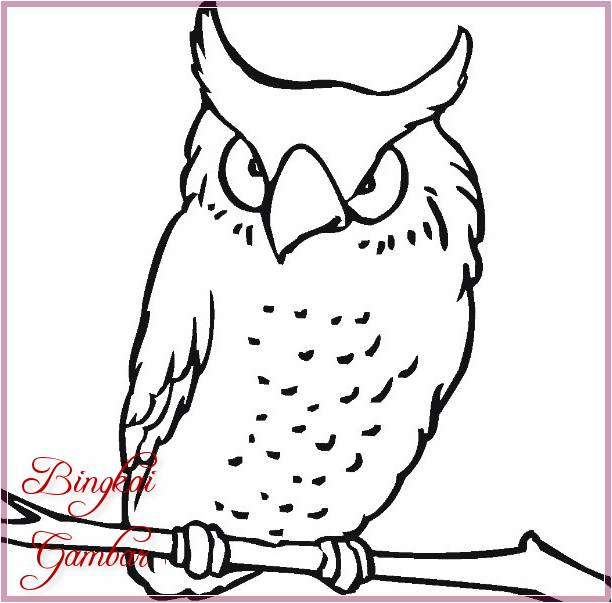 Gambar Sketsa Burung Hantu Mudah Terbaru