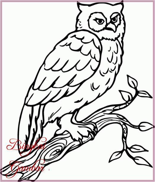 Gambar Sketsa Burung Hantu Terbaru