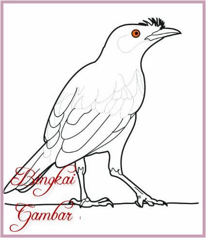 Gambar Sketsa Burung Jalak Terbaru