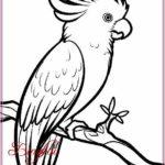 Gambar Sketsa Burung Kakak Tua Terbaru