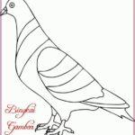 Gambar Sketsa Burung Merpati Terbaru