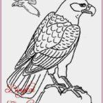 Gambar Sketsa Burung Rajawali Terbaru