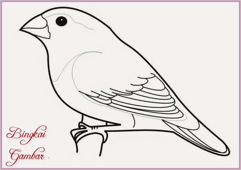 Gambar Sketsa Burung Sederhana Terbaru