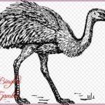 Gambar Sketsa Burung Unta Terbaru