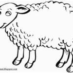 Gambar Sketsa Hewan Domba Terbaru
