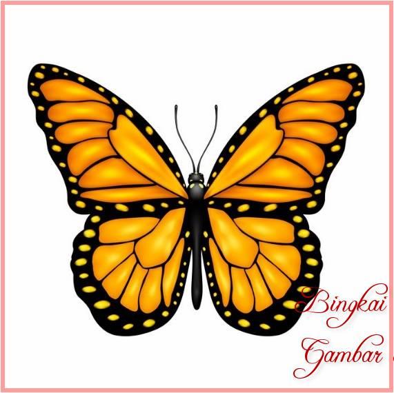 73 Gambar Sketsa Binatang Kupu-kupu Terbaru