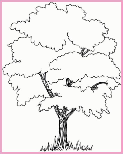 Gambar Sketsa Pohon Belimbing Terbaru
