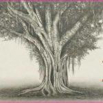 Gambar Sketsa Pohon Beringin Terbaru