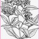 Gambar Sketsa Pohon Bunga Terbaru