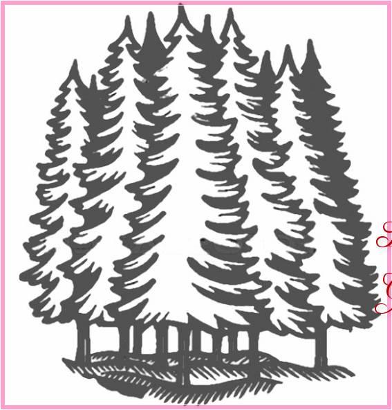 Gambar Sketsa Pohon Cemara Terbaru