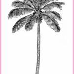 Gambar Sketsa Pohon Kelapa Terbaru